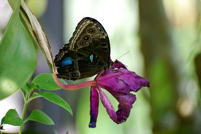 Photograph - Butterfly6 by Rob Hans