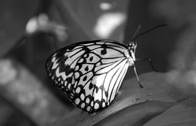 Photograph - Butterfly7 by Rob Hans
