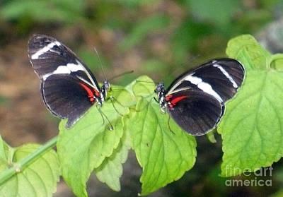 Butterfly9 Print by Kryztina Spence