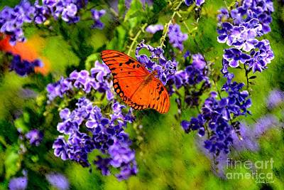 Photograph - Butterfly's Breakfast by Darla Wood