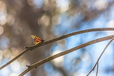 Photograph - Butterfly's Dream by Kim Swanson