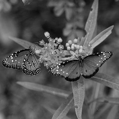 Photograph - Butterflys by Joseph G Holland