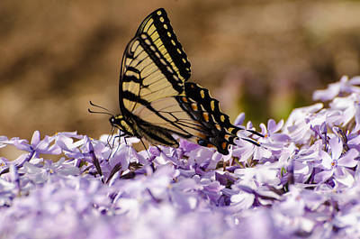 Butterfy On Flowers Art Print