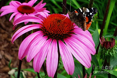 Butterly On Flower Art Print by Claudette Bujold-Poirier