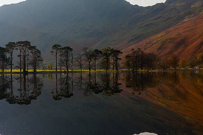 Photograph - Buttermere Pines by Nick Atkin