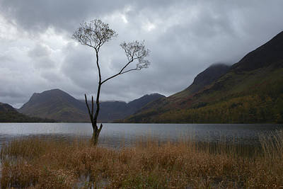 Buttermere Tree Art Print