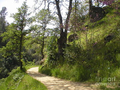 Buttermilk Trail South Yuba Art Print