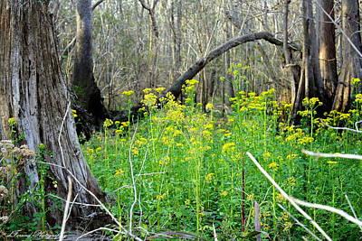 Butterweed Florida Wildflower Print by Debra Forand