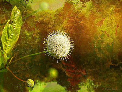Digital Art - Buttonbush by J Larry Walker