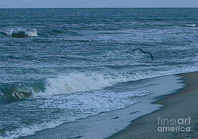 Sandy Photograph - Buxton Beach And Flying Gull by Cathy Lindsey