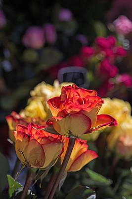 Photograph - Buy Me A Rose by Deb Buchanan