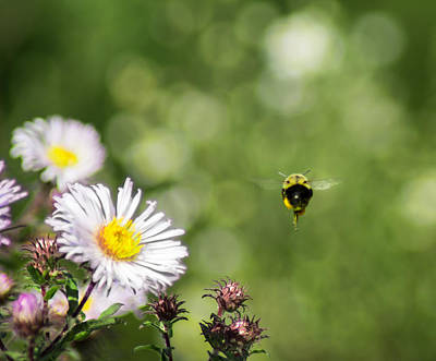 Photograph - Buzz By Here - To Infinity And Beyond by Bill Pevlor