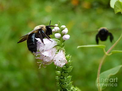 Photograph - Buzz Off by Jane Ford