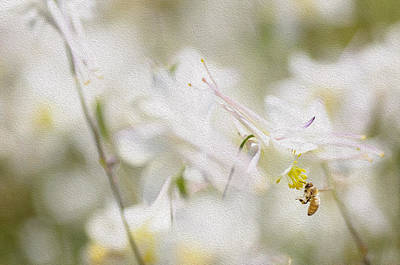 White Flower Photograph - Buzz by Rebecca Cozart