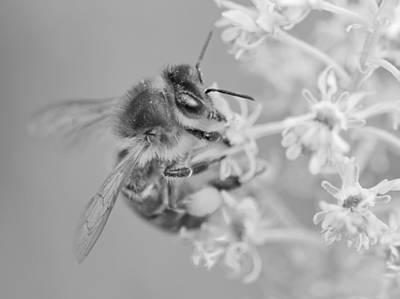 Photograph - Buzz by Steven Poulton
