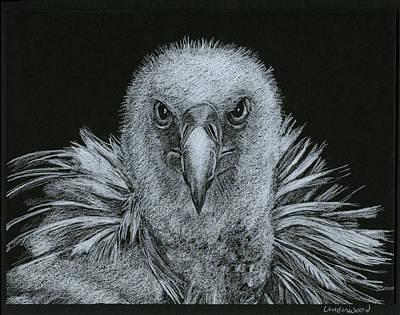 Buzzard Drawing - Buzzard by William Underwood