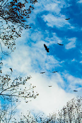Photograph - Buzzards In Flight by Jim McCain