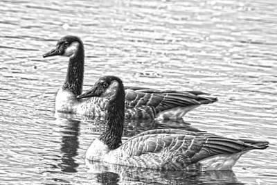 Photograph - Bw Hdr Geese On The Pond I by Lesa Fine