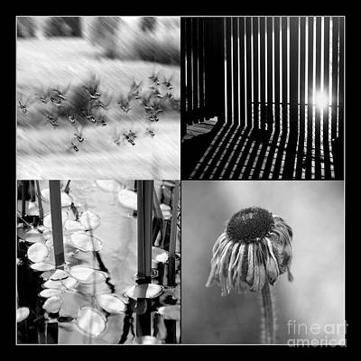 Photograph - Bw Montage 01 by Aimelle