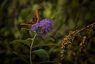 Photograph - By Light Of The Butterfly by Belinda Greb
