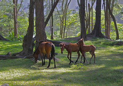 Horses Photograph - By My Side by Kimberly Reeves