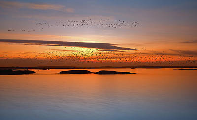 Migration Photograph - By Sunset by Piotr Krol (bax)