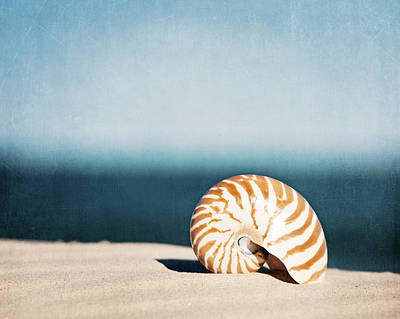 Beach Shell Sand Sea Ocean Photograph - By The Blue by Carolyn Cochrane