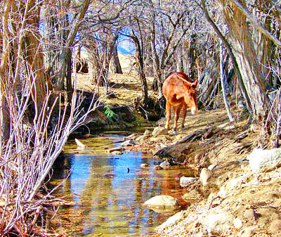 Photograph - By The Creek by Marilyn Diaz