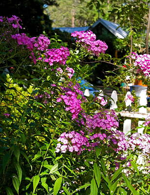 Photograph - By The Garden Gate by Michele Myers