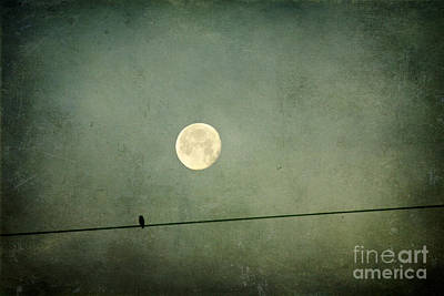 By The Light Of The Moon Art Print by Joan McCool