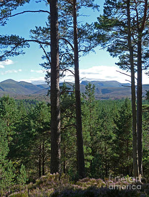 Photograph - Cairngorms From Abernethy Forest by Phil Banks