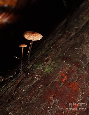 Photograph - C Ribet Mushroom And Fungi Art The Sage by C Ribet