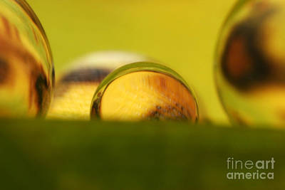 Photograph - C Ribet Orbscape 0850 by C Ribet