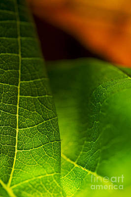 Photograph - C Ribet Orbscape Leaf Union by C Ribet