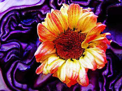 Red Cabbage Photograph - Cabbage And Daisy by Sarah Loft