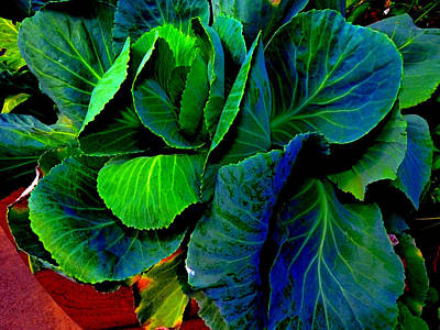 Cabbage Gone Wild Art Print by Susan Duda