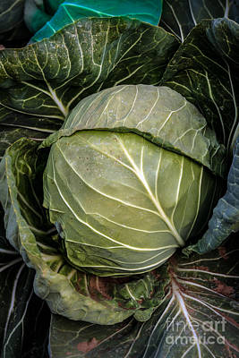 Brassica Oleracea Photograph - Cabbage Head by Robert Bales
