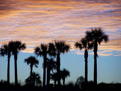 Photograph - Cabbage Palm Sunrise by rd Erickson