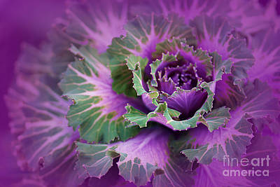 Photograph - Cabbage Patch by Judi Bagwell
