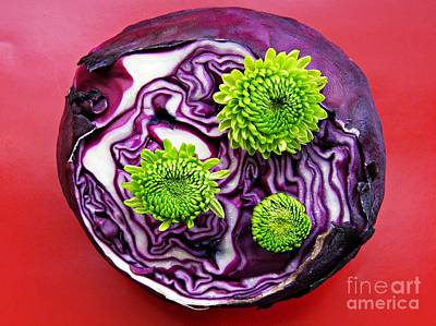 Red Cabbage Photograph - Cabbage Patch by Sarah Loft