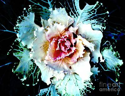 Cabbage Digital Art - Cabbage by Sarah Loft