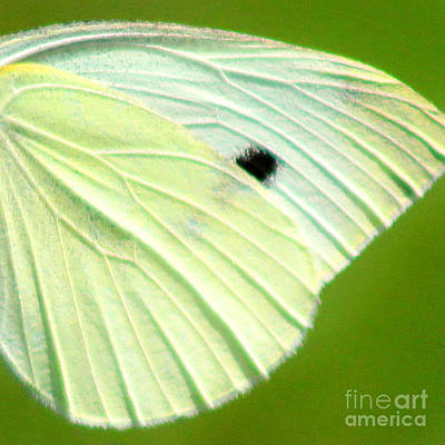 Photograph - Cabbage White Butterfly Wing Square by Karen Adams