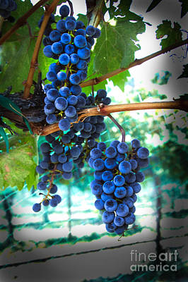 Cabernet Sauvignon Grapes Art Print by Robert Bales