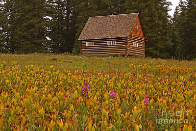 Photograph - Cabin On Grand Mesa by Kelly Black