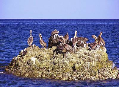 Cabo Pelicans Art Print by John Wartman
