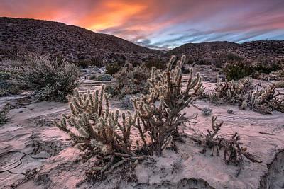 Anza-borrego Desert Photograph - Cac-dusk by Peter Tellone