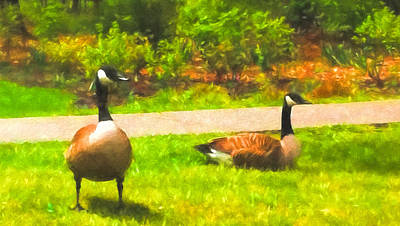 Canadian Geese Mixed Media - Cackling Geese by Larry Ferreira