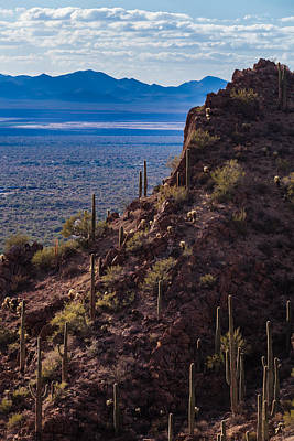 Photograph - Cacti Covered Rock At Tucson Mountains by Ed Gleichman