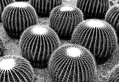 Photograph - Cacti by Ethna Gillespie
