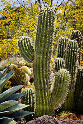 Cacti Habitat Art Print by Kelley King